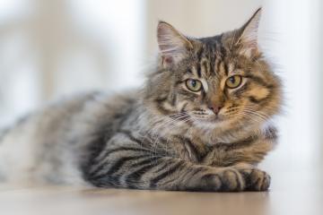 Как помыть кота, если он боится воды