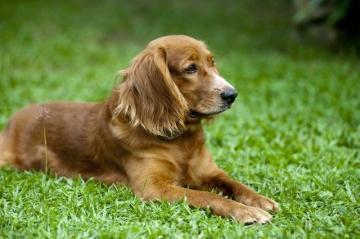 Символ 2018 года – Желтая Земляная Собака