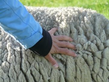 Шубы из овчины