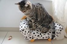 Кот оставил пятно на диване