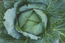Рецепты салатов из капусты на зиму
